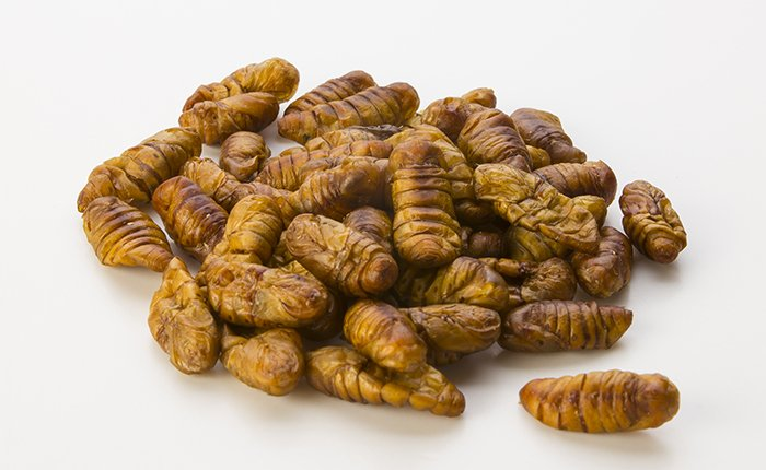 edible silkworms bombyx mori pupae buy edible insects