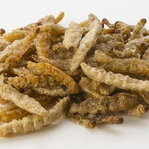 Buy Edible Insects For Sale Online | Ready To Eat Insects