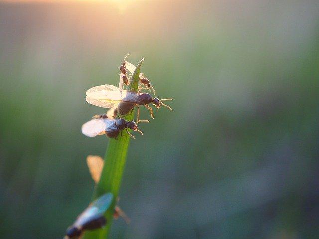 Chinesische Rüsselkäfer dienen zum Abnehmen